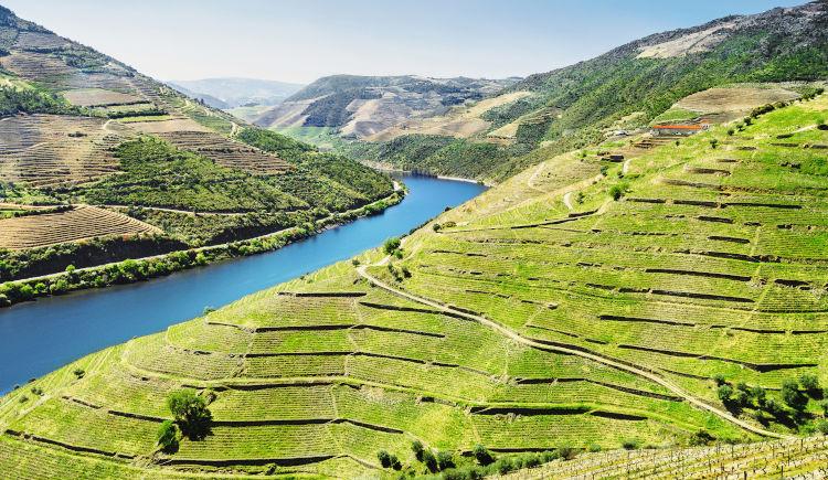 Vallée du Douro : Sur la route des vins