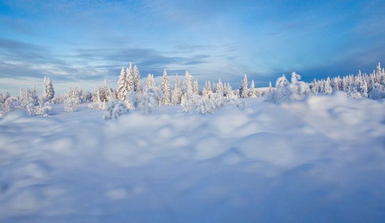 couleurs d hiver