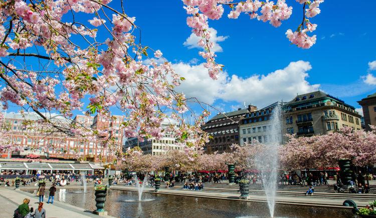 fleur de cerisier Stockholm