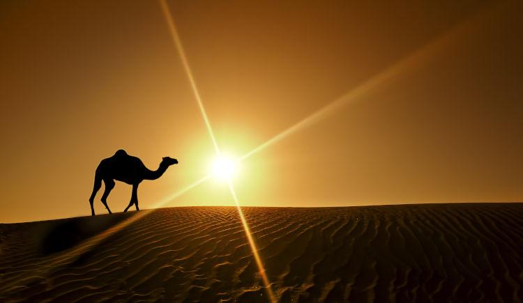 Il était une fois les Emirats 5* Dubaï to Dubaï