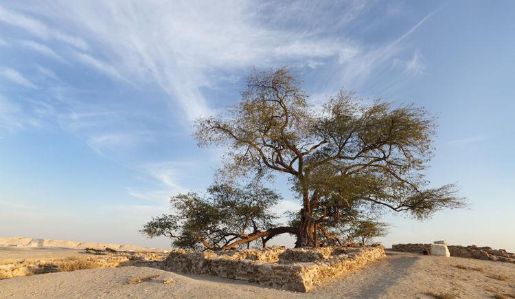 Shajarat al-Hayah arbre de la vie