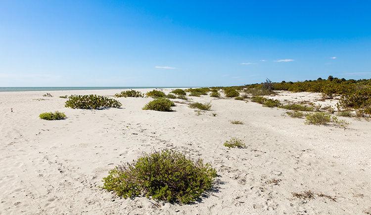 plage de Sanibel Island
