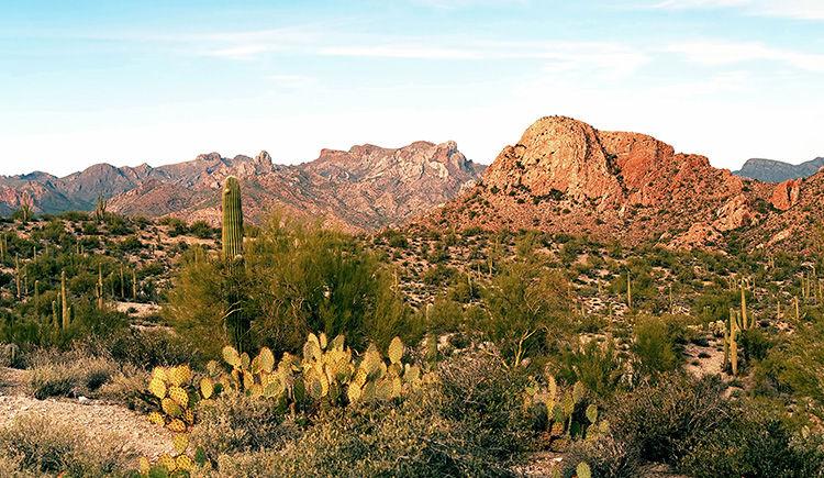 desert de Sonora