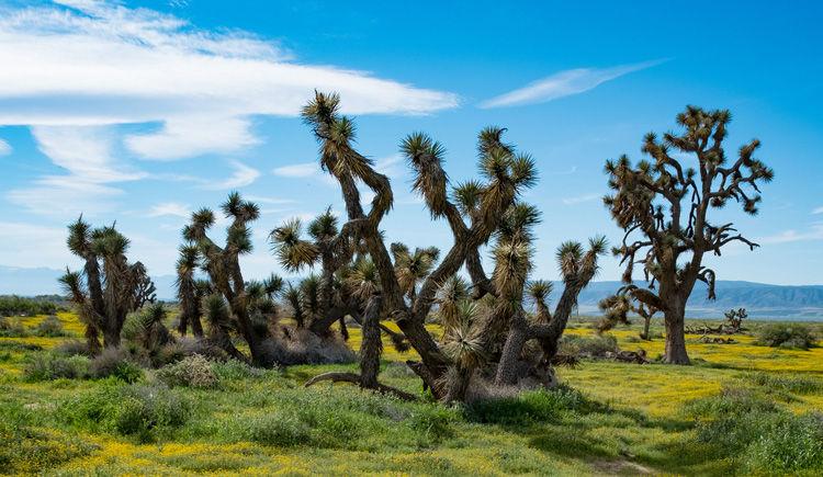 desert de Mojave