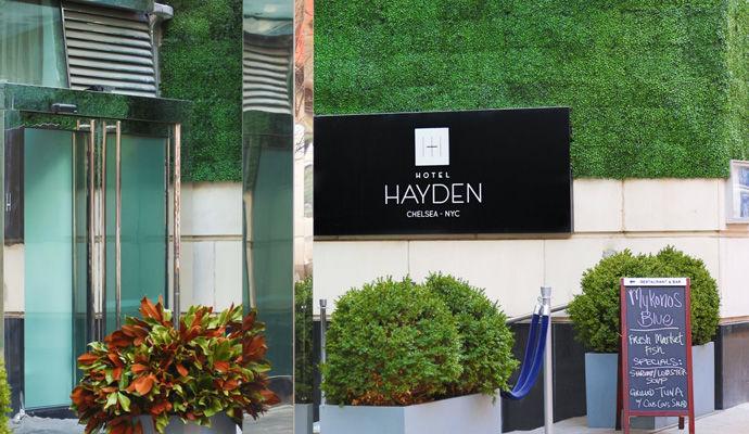 Hayden 3 *